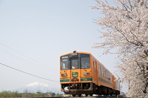 090430 十川の桜と岩木山