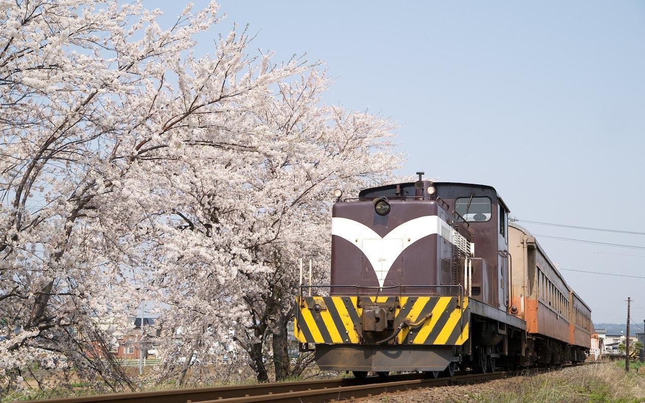 090430 津軽鉄道・十川の桜並木と客車列車