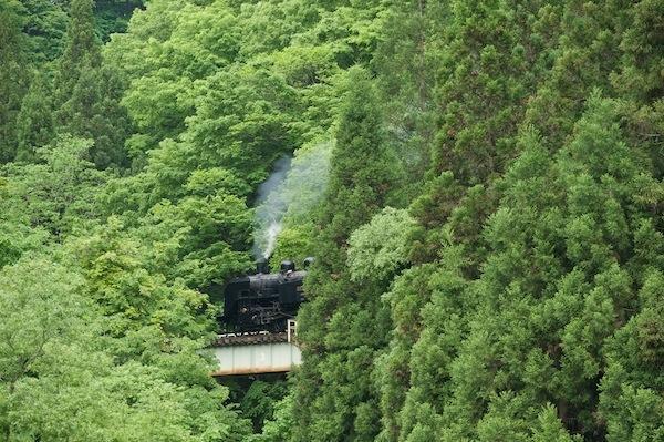 090524 木立の中を走るC11