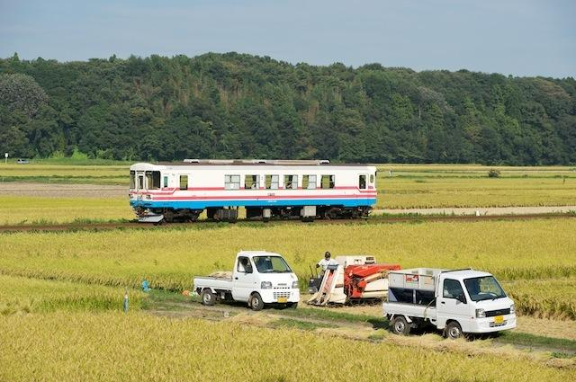 090913 中根の稲刈りとミキ300-103