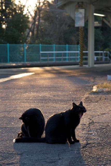 091206 浅野駅3番線ホームのネコたち