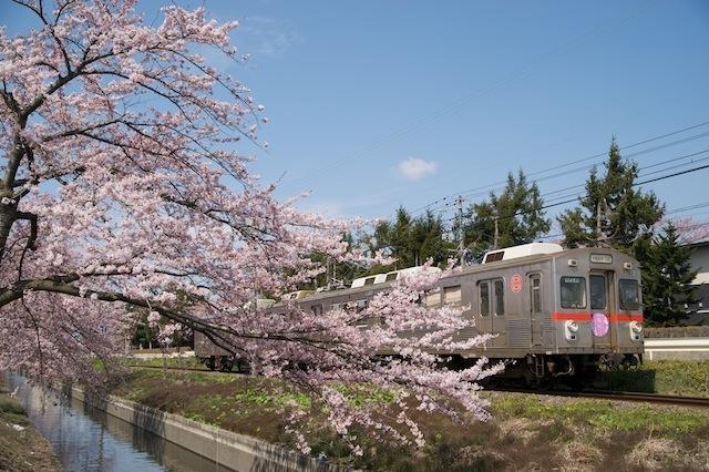 100502 十和田工業高校前の桜と十鉄電車