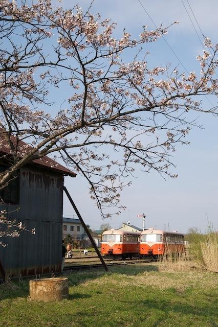 100502 七戸駅車庫裏の桜