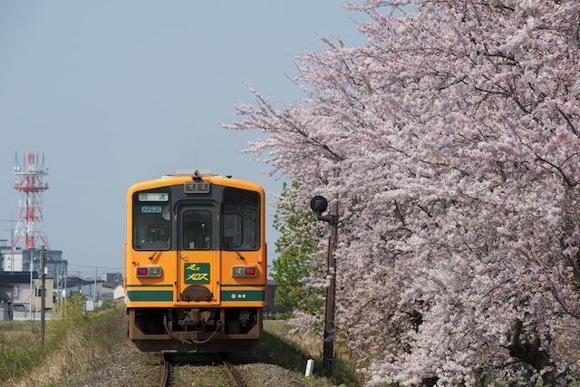 100503 十川の桜とメロス号(後追い)