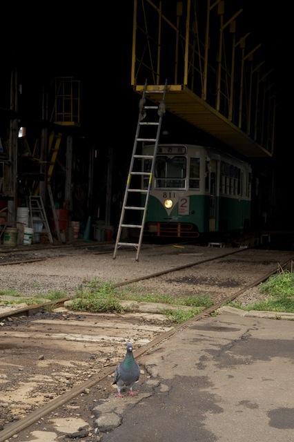100919 駒場車庫のハト
