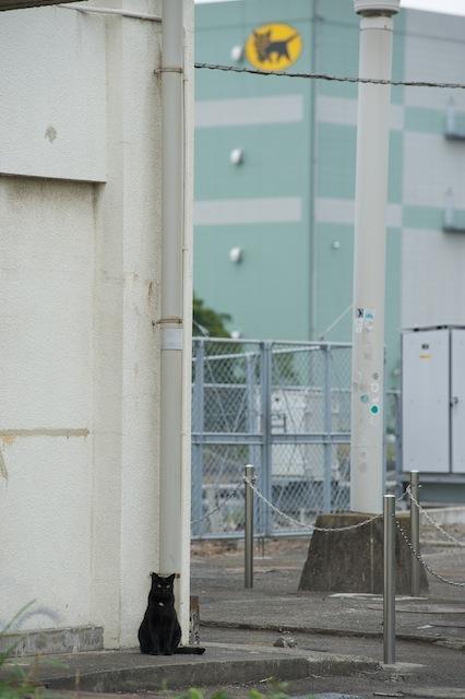 100926 浅野駅舎脇に佇むクロネコ