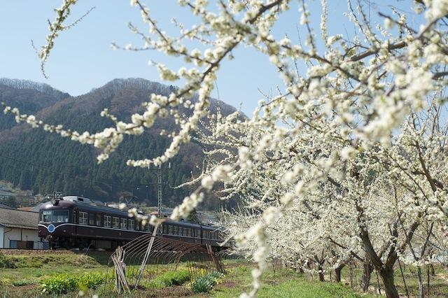 100418 りんごの花と長電2000系特急