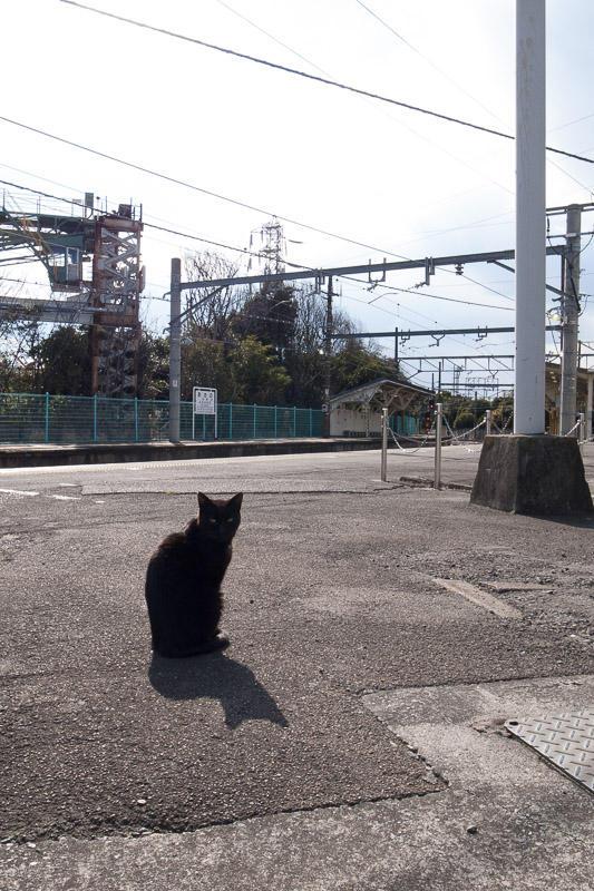 110327 浅野駅の黒猫