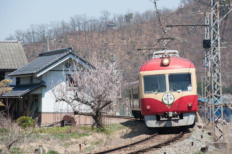 110417 若穂駅近くの花と2000系