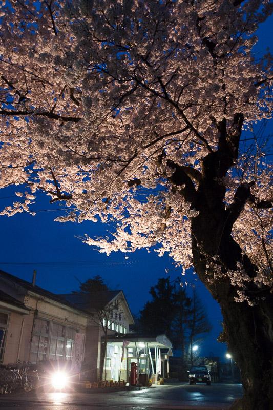 110430 長井駅前の桜