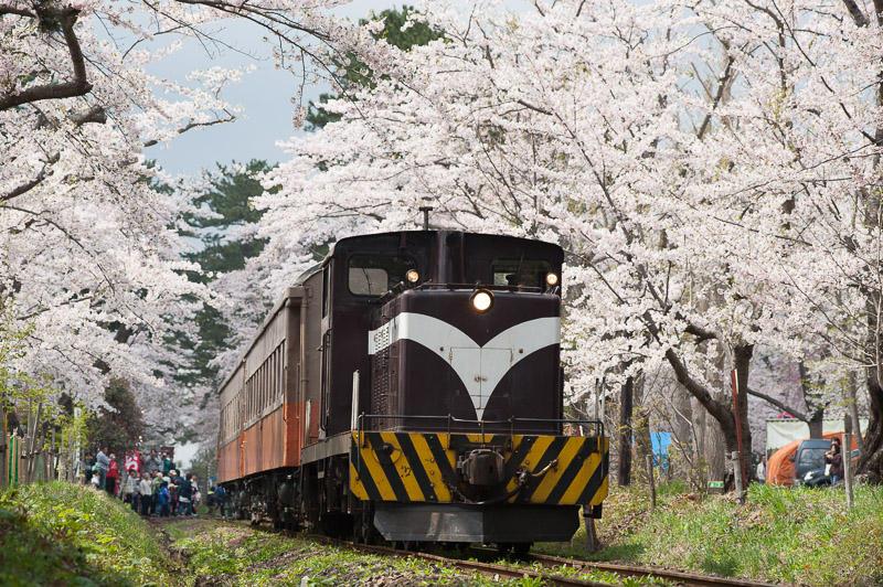 110504 桜のトンネルを抜ける客車列車