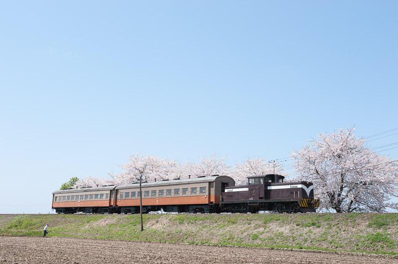 110505 十川の桜並木を走る客車列車