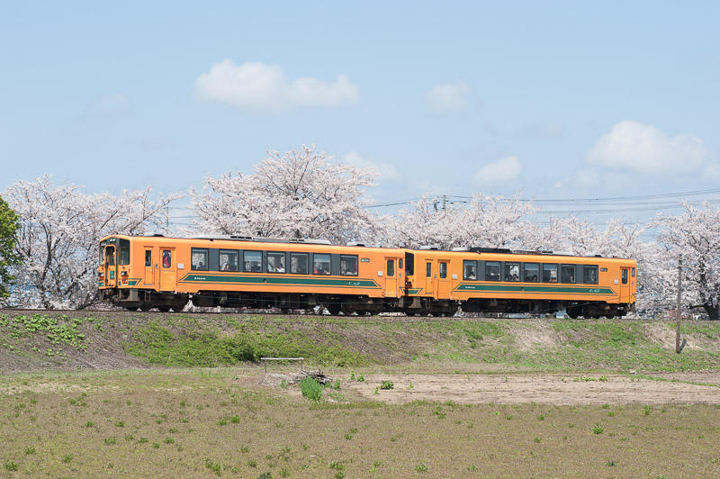 110505 十川の桜の横を走る上り列車