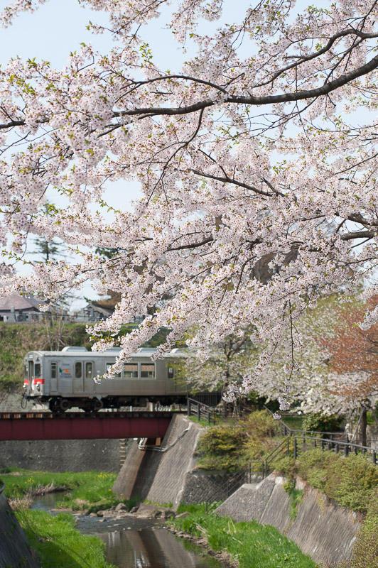 110506 土淵川紙漉町緑地の桜と大鰐線