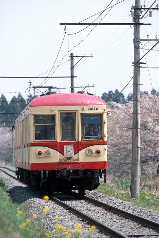 020430 桜並木を背に走る3810
