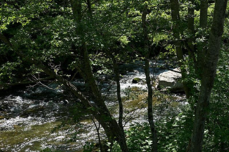 120527 木々の向こうを流れる閉伊川