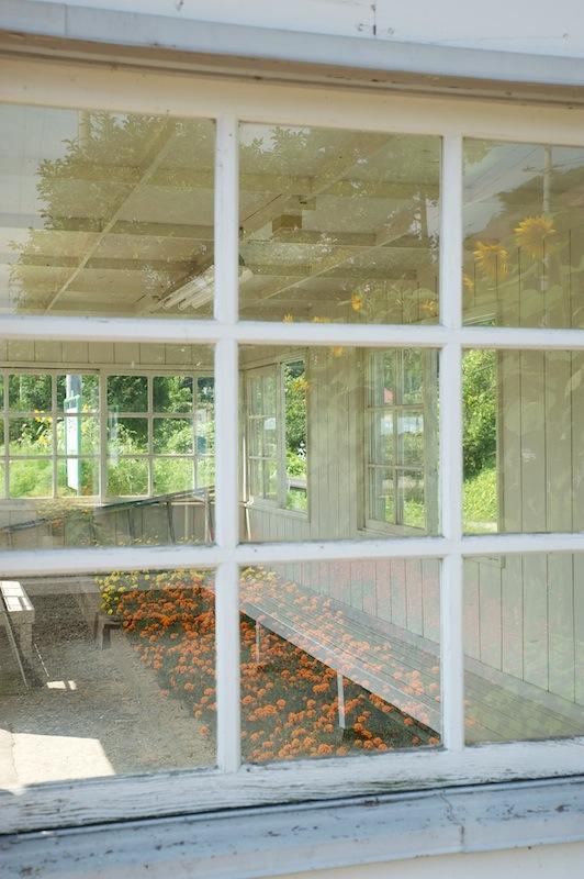 120823 待合室の窓に映る花々