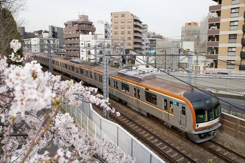 130326 東白楽の桜とメトロ10000