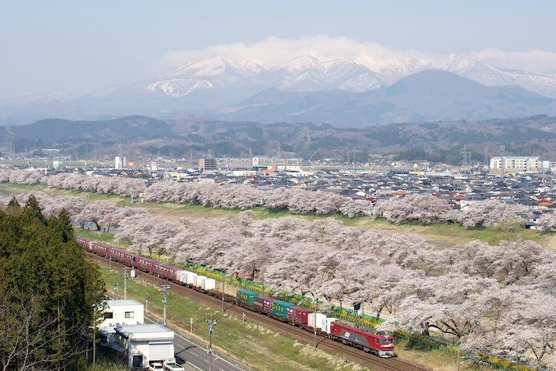14 0412 一目千本桜と蔵王連峰