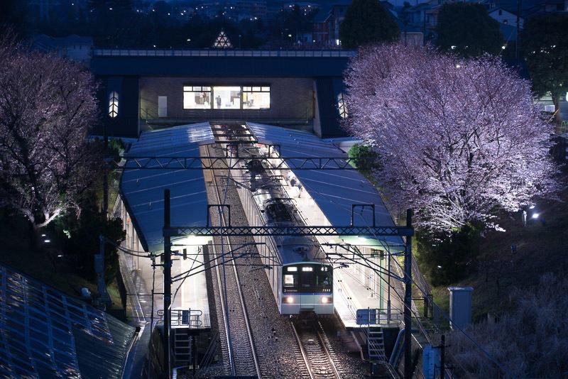 150329 桜がライトアップされた弥生台駅