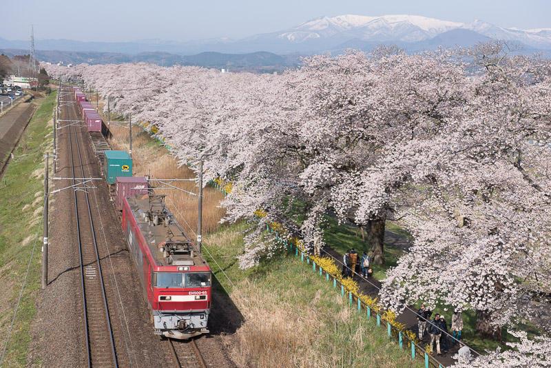150412 蔵王と桜と貨物列車