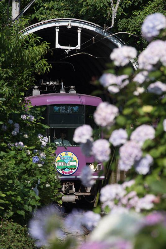 160618 極楽寺トンネルを出る江ノ電と紫陽花