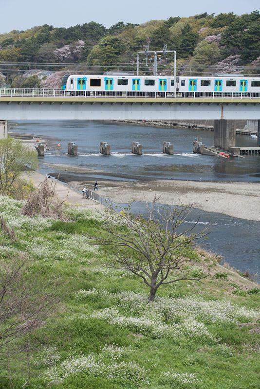 170415 春の多摩川とS-TRAIN