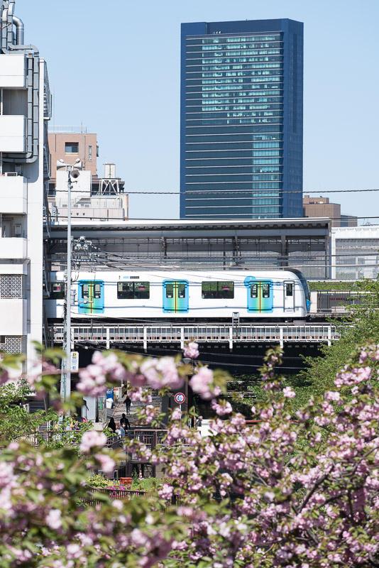 170423 目黒川の八重桜とS-TRAIN
