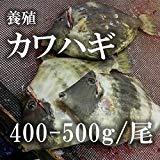 カワハギ 活けじめ 養殖 大分産他 1尾(400-500g/尾) 【築地直送】活〆 鮮魚