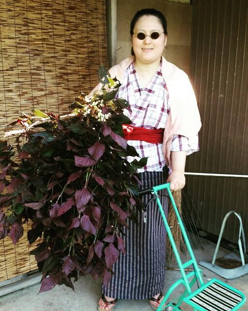 f:id:taketsurutanuki:20160822100825j:image