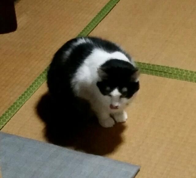 f:id:taketsurutanuki:20161111200021j:image