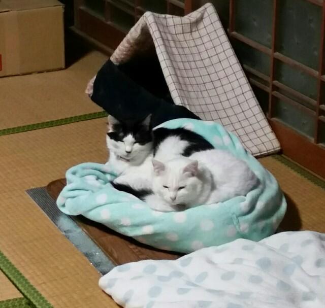 f:id:taketsurutanuki:20161215070157j:image