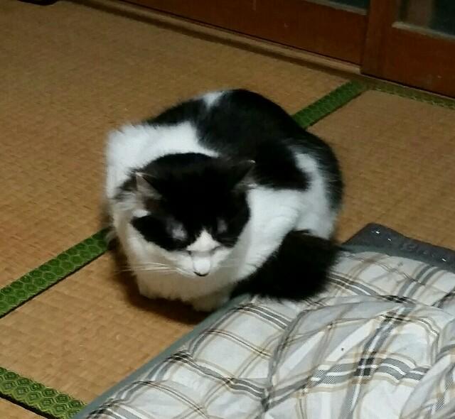 f:id:taketsurutanuki:20170227005251j:image