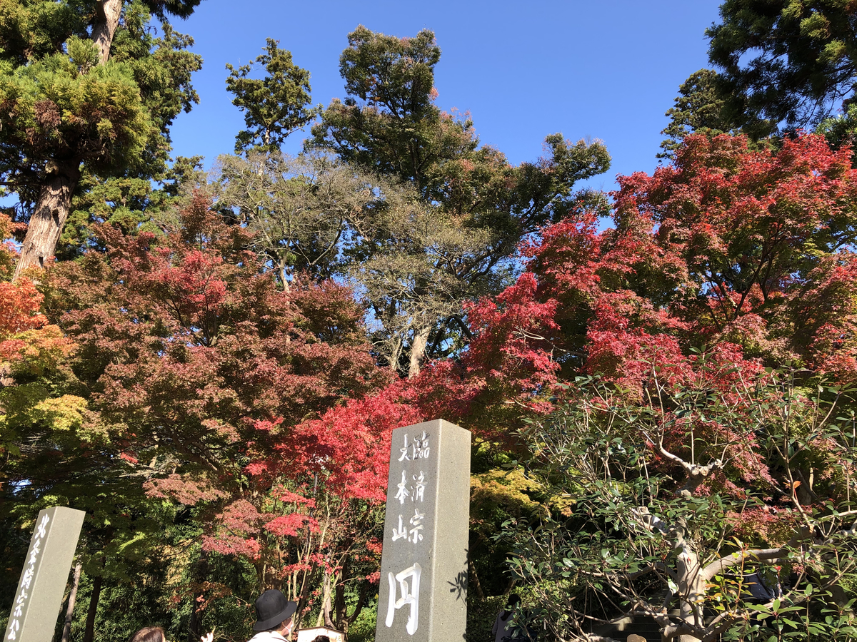 f:id:takeuma02:20201116143432j:plain