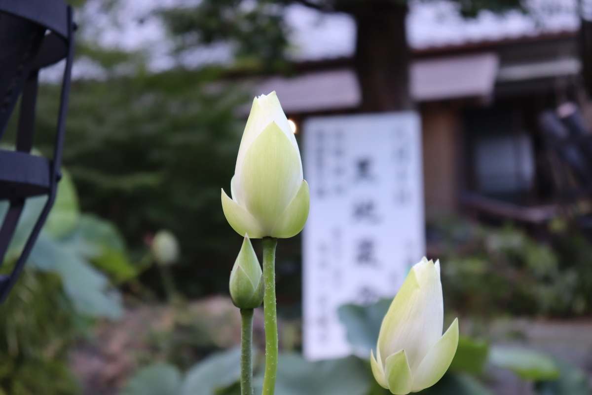 f:id:takeuma02:20210810113216j:plain
