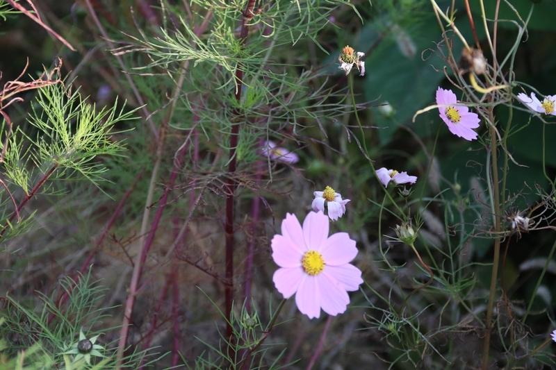 道端に咲いていた花