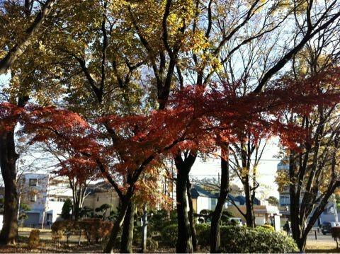 f:id:takigawa401:20101205153158j:image