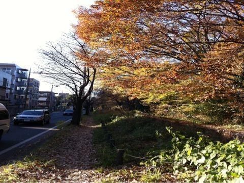 f:id:takigawa401:20101205153415j:image