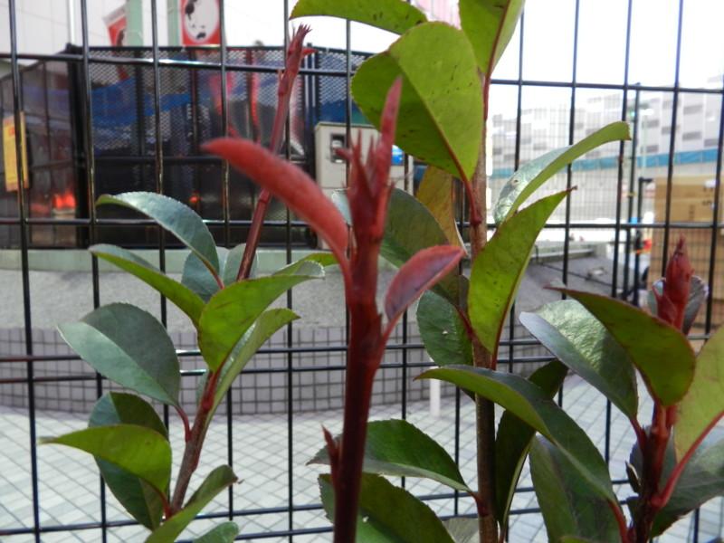 f:id:takigawa401:20120101083154j:image
