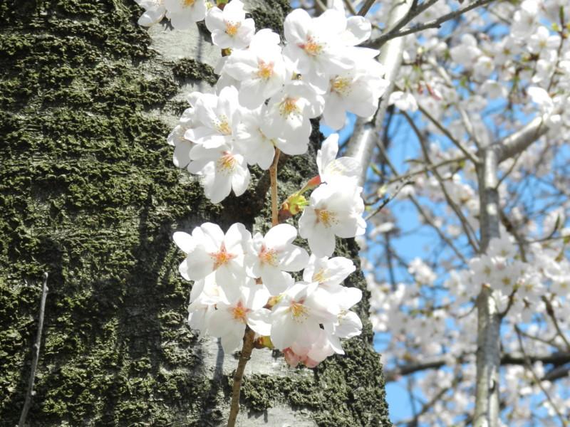 f:id:takigawa401:20120413111921j:image