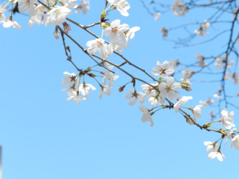 f:id:takigawa401:20120413111922j:image