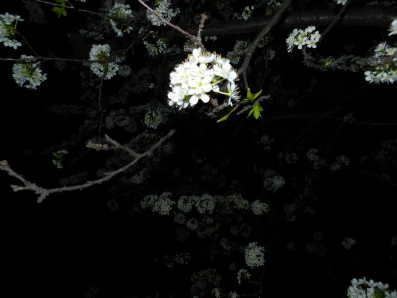 f:id:takigawa401:20120413112022j:image