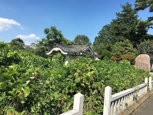 f:id:takigawa401:20160731205222j:image