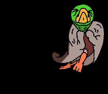 だいぶうれしい鴨