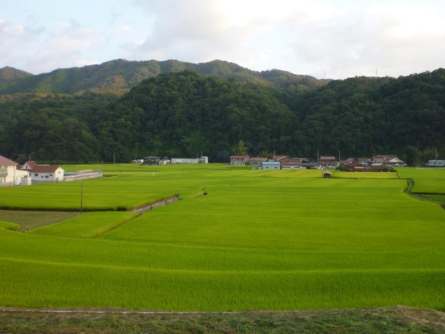 よく稲の実った田園風景