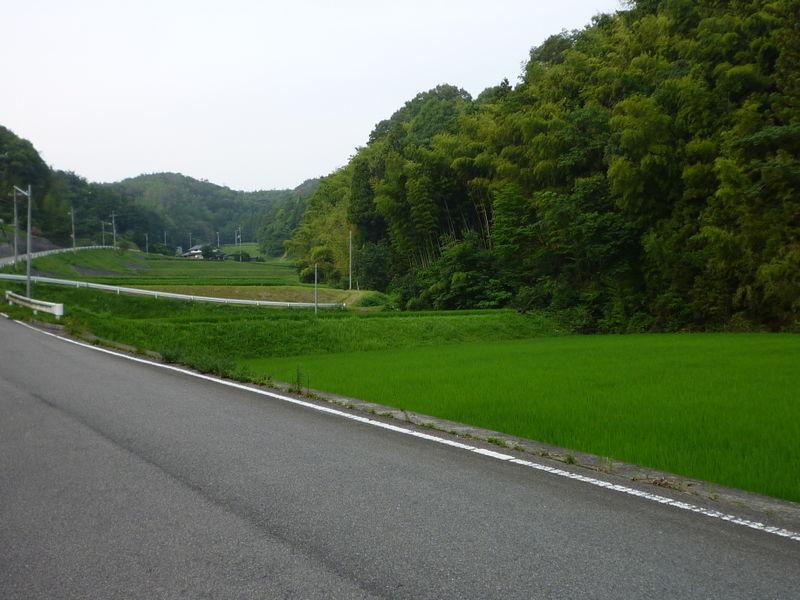 山間の田んぼ沿いの道路