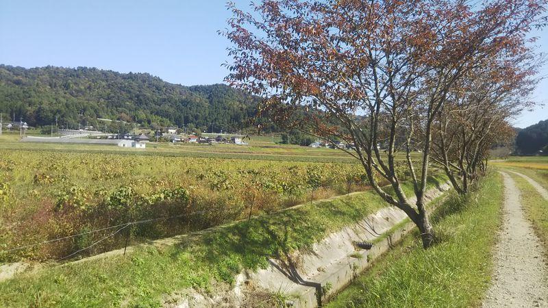 水路沿いの農道と畑