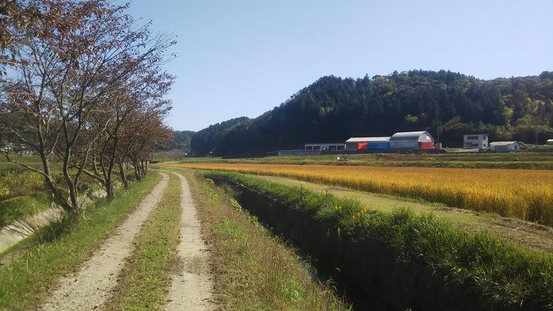 田んぼと水路の間にある農道