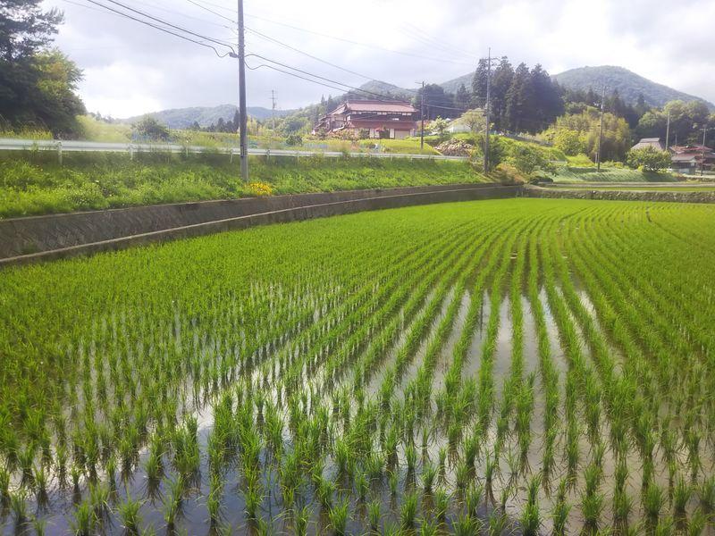 良く晴れた日のまだ稲の育っていない田園風景