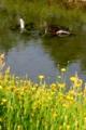 京都新聞写真コンテスト 人に汚される川